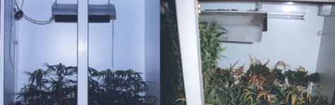 Cultivo interior cultivo en armarios marihuana cultivo for Armarios cultivo interior