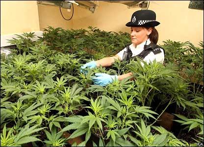 policeingrow