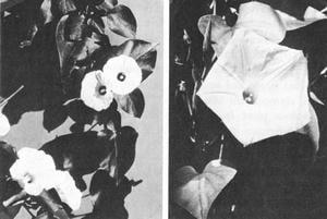 imagen_flores