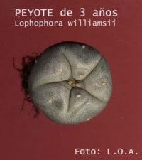 peyote3anos