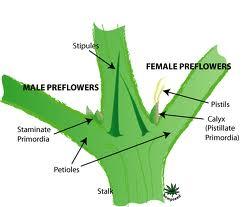 femalepreflow