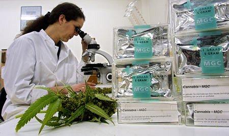 El número de investigaciones y ensayos clínicos con cannabis ha crecido considerablemente en los últimos años