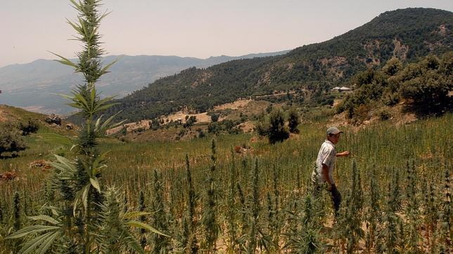 Trabajador agrónomo marroquí