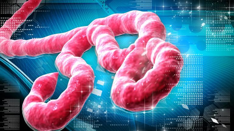 Algunos expertos afirman que los efectos retrovirales de los cannabinoides deben ser usados contra el Ébola