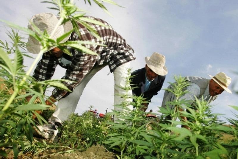 Campesinos marroquies trabajando el campo
