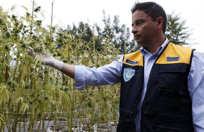 El alcalde del municipio muestra orgulloso las primeras plantas