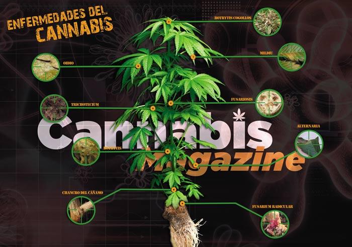 Enfermedades Cannabis | Pulsa para ampliar