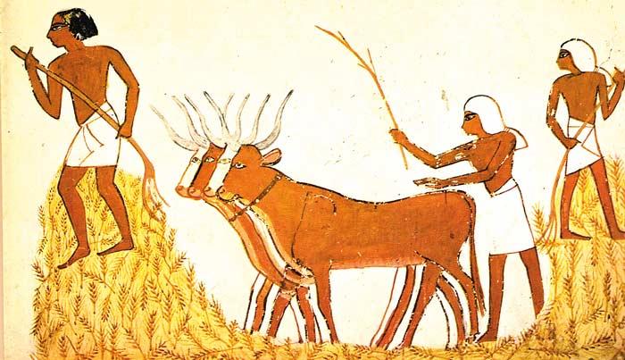 Trilla del trigo en el Antiguo Egipto