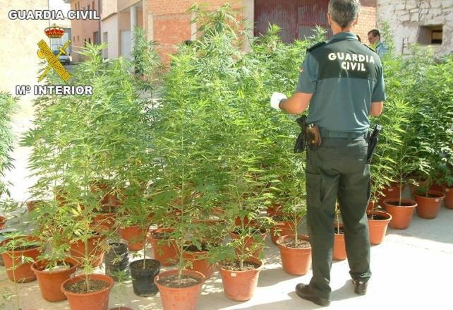 Guardia civil vigilando que las plantas no se muevan y leyéndole sus derechos