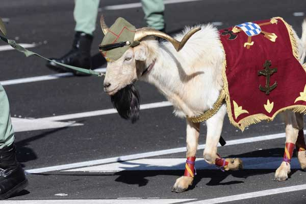 Típica cabra culera legionaria...