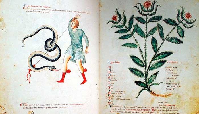 Libro de Medicina antigua