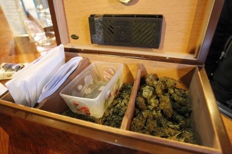 Curso para profesionales de Clubs de Cannabis