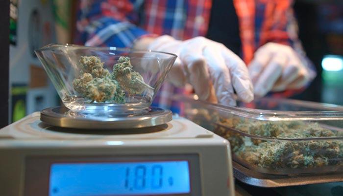 VICE viaja hasta Madrid para conocer a la red de pacientes, activistas y médicos que luchan por que la marihuana terapéutica entre dentro del circuito sanitario en España.