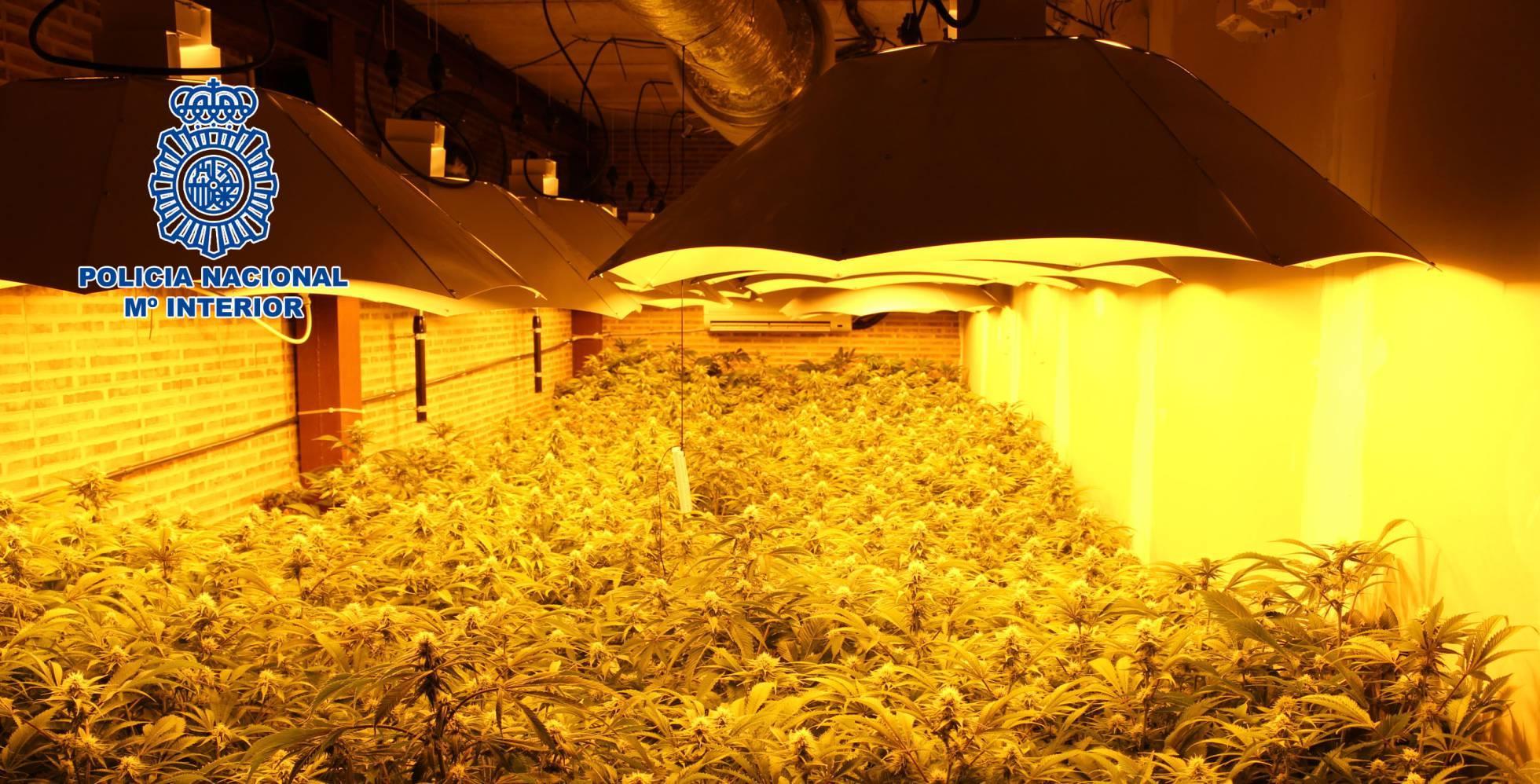 Plantas halladas por la Policía Nacional