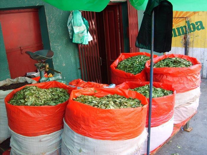venta hojas de coca