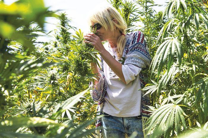 La turista alemana Beatrix en un campo de cannabis
