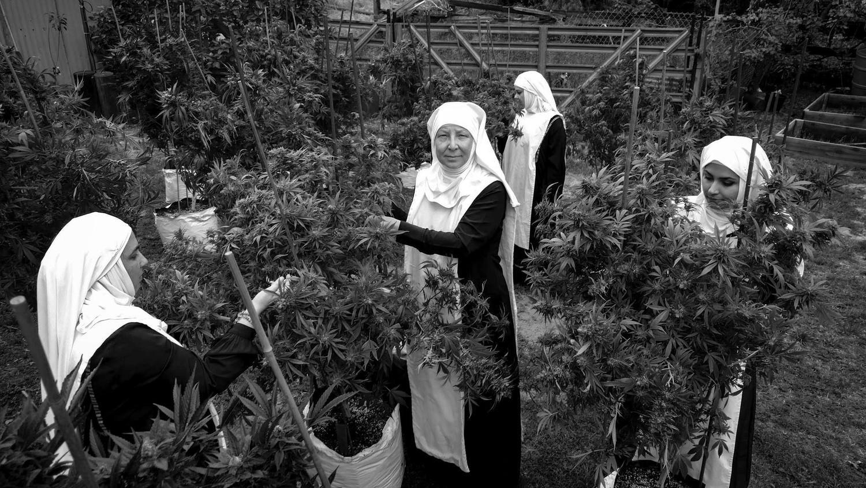 Hermandad de mujeres dedicadas al cultivo de marihuana en California.