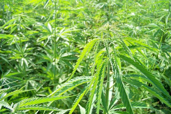 1. Fuera de temporada, las plantas presentan un crecimiento pobre