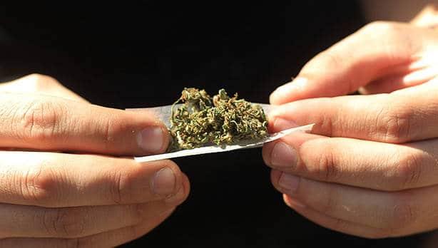 cannabis liando