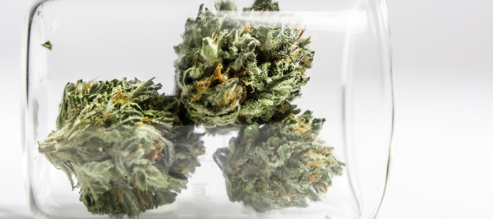 Cannabis en laboratorio