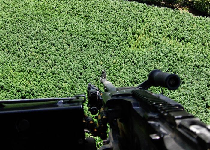 Plantación de cannabis en Afganistán