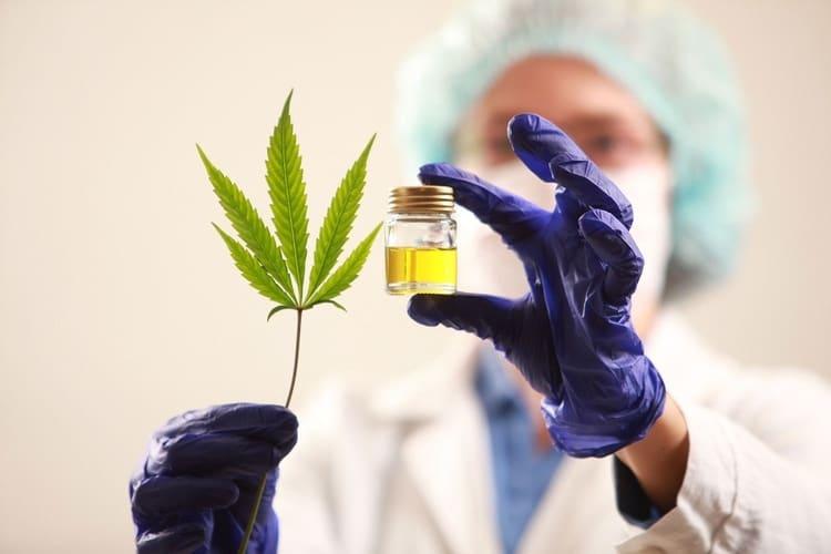 Hubo 55,000 participantes de GDS que consumieron cannabis en el último año