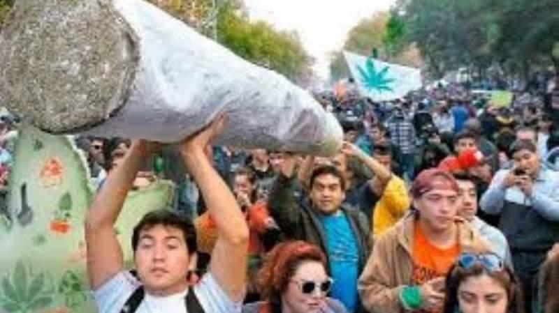 Costa Rica lidera movimiento centroamericano a favor del uso medicinal e industrial de la marihuana