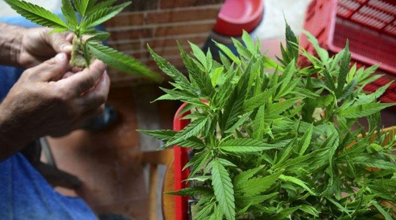La abuela platense pasó varias horas detenida tras ser allanada por cultivar cannabis con fines terapéuticos.