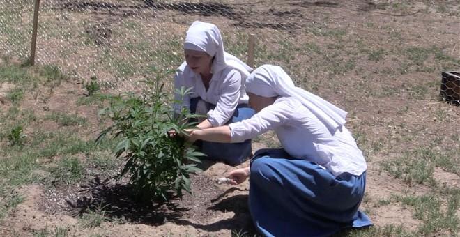 Las Hermanas del Valle llevan cuatro años y medio cultivando plantas de marihuana y elaborando productos con CBD en una granja secreta en Merced, California.
