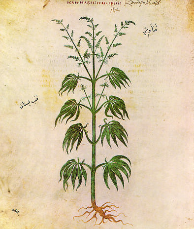 Ilustración de cannabis en 'Vienna Dioscorides' (512 a. C).