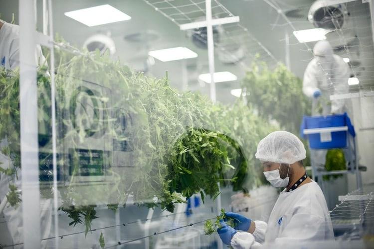 Laboratorio de una de las empresas autorizadas a trabajar en Uruguay