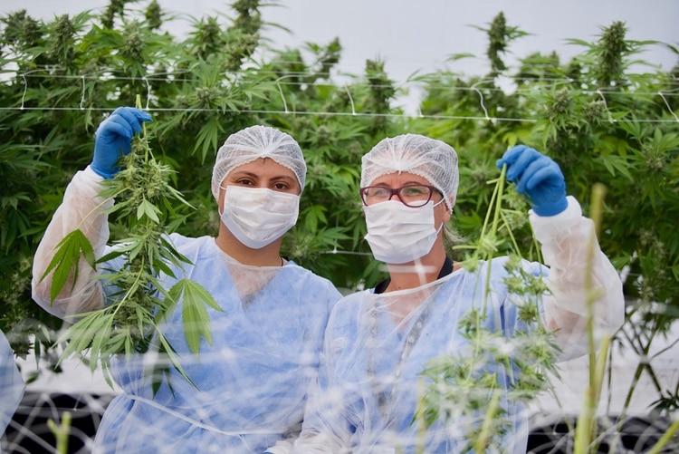 Trabajadoras de una de las empresasque fabrica aceite de cannabis
