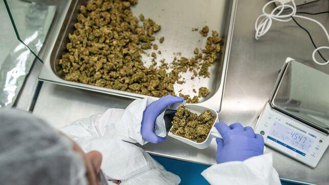 Latinoamérica necesita homogeneizar sus normas sobre el cannabis medicinal