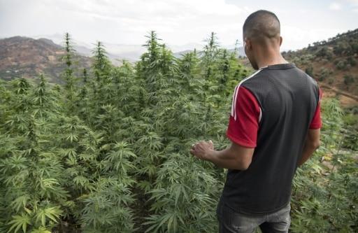 Un lugareño cerca de un cultivo de cannabis, en los alrededores de la ciudad de Ketama, en la región del Rif, en el norte de Marruecos, el 2 de septiembre de 2019