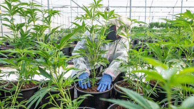 El cannabis medicinal abre nuevas oportunidades a la economía colombiana