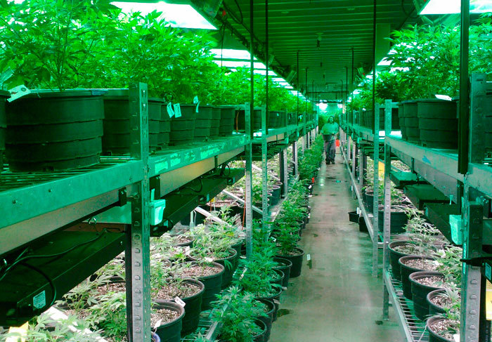 Cultivo en Colorado