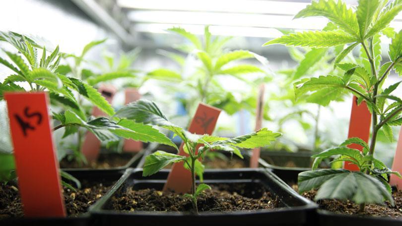 Luces de cultivo eficientes