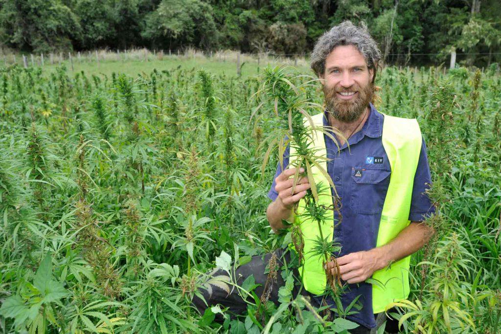 El cannabis en España: una sustancia ilegal que genera millones de euros 5