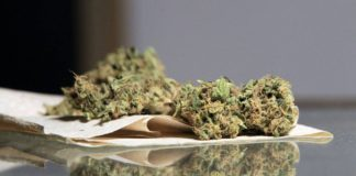 Cannabis: Efectos sobre la salud y la sociedad