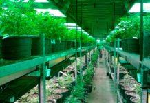 Iluminación en un cultivo indoor