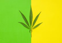 Marijuana cannabis leaf.