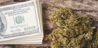 dried cannabis medical marijuana with dollar bill