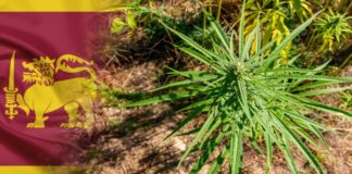 Sri Lanka cannabis
