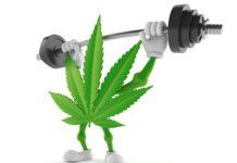Cannabis character lifting heavy barbell