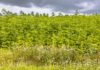 Field of Hemp agricultural industry