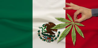 green leaf of cannabis in a man���s hand against the background of a colored state flag, the concept of legalization, trade, production and use of drugs in the country