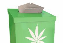 Marijuana Pot Weed Cannabis Suggestion Box Vote Feedback 3d Illustration