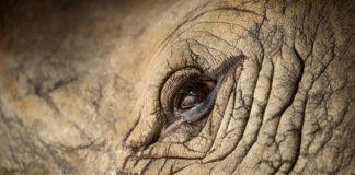rhino skin, texture of rhino skin for background