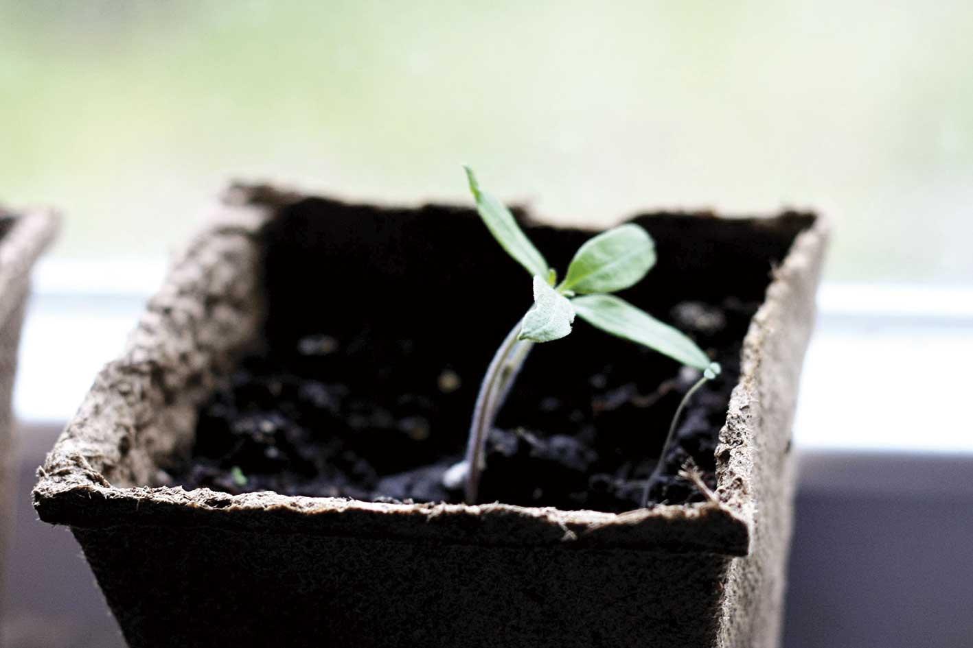 Cualquier planta crece en un sustrato apropiado