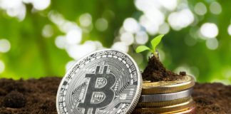 Sprout plant and bitcoin, growth of bitcoin crypto currency